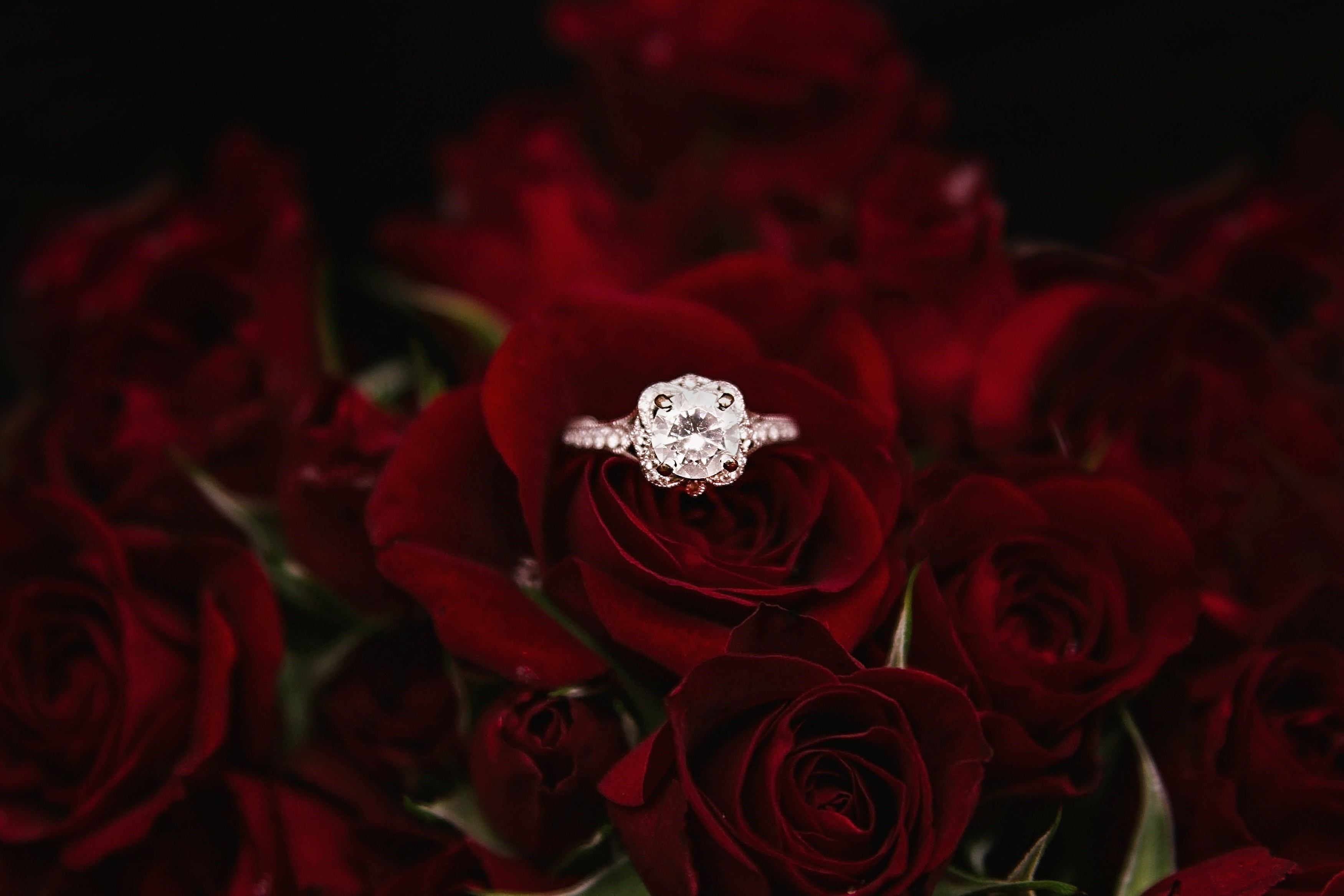 Diamond ring surrounded by red roses